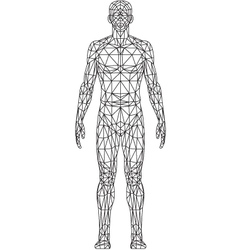 Wire Frame MAN vector image