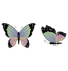 Colorful Butterfly2 vector image