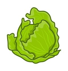 Green cabbage cartoon vector