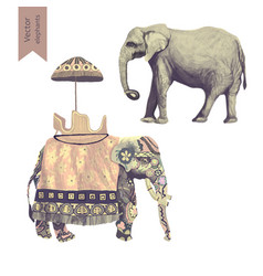 Indian elephants set isolated on vector