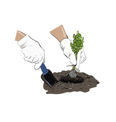 Sketch planting a plant plants in the ground vector