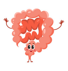 Cute and funny smiling healthy bowel intestine vector