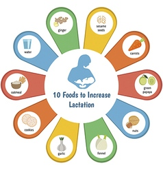Foods to increase lactation vector