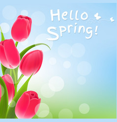 postcard with tulips vector image vector image