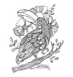 Toucan bird coloring book for adults vector