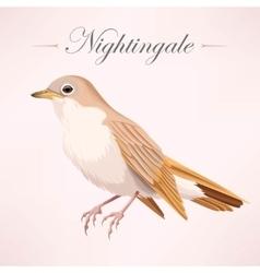 Vintage beautiful nightingale vector image