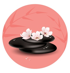 stones and cherry flowers vector image