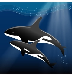 Whale and her calf swimming in the ocean vector