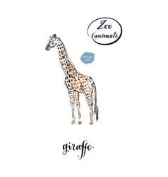 giraffe made in watercolor vector image vector image