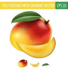 Mango on white background vector