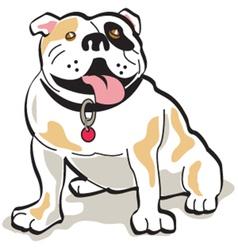 Bulldog vector