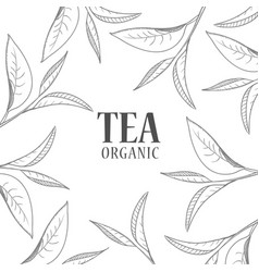 organic tea cover design vector image
