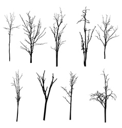 Black silhouette of a bare tree vector