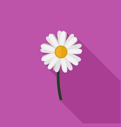 chamomile flat icon vector image vector image