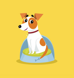 Cute jack russell terrier sitting on dogs bed vector