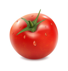 tomato isolated on the white background vector image