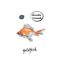 watercolor orange goldfish vector image