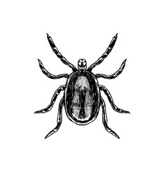 Hand drawn sketch of mite top view vector