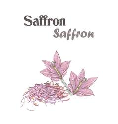 Saffron spice Crocus flower Skech Saffron vector image vector image
