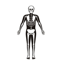 silhouette male system bone with bone vector image