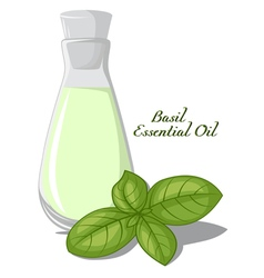 Basil essential oil vector