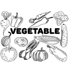 Vegetable coloring for adults vector