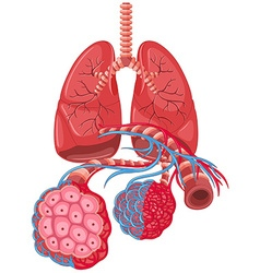 Diagram showing lung cancer vector