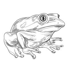 Frog outline vector