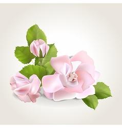 Rose corner vector