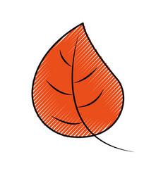 Autumn leaf foliage flora decoration vector