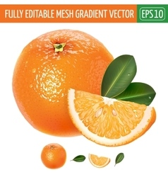 Orange on white background vector