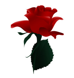 blooming red flower rose vector image