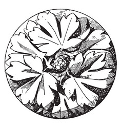 early gothic boss rosette is made of three vector image vector image