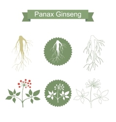 Ginseng isolated plant on white background vector