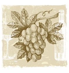 hand drawn grape vector image vector image