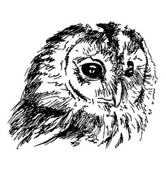 Hand sketch owl head vector
