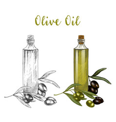 sketched branch of olive oil in glass bottle vector image vector image