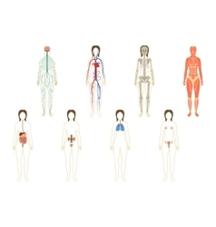 Set of woman organs and systems vector image