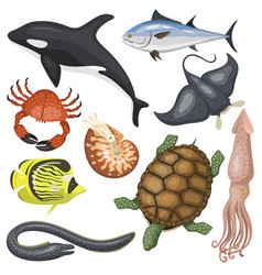 Set of different types of sea animals vector