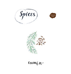 Watercolor cumin seed with twig vector