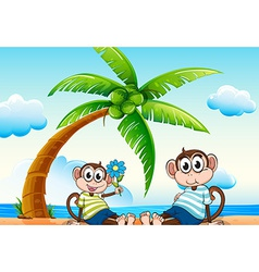 Monkeys and beach vector image