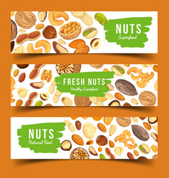 Cards with nuts food pecan and nutmeg hazel vector