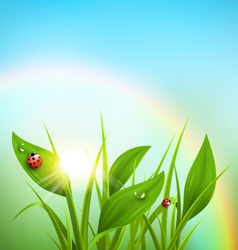 Green grass plantain and ladybugs with sunrise and vector