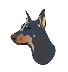 Doberman dog vector