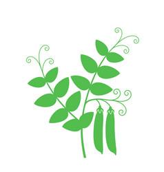 Pea plant vector