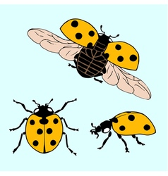 Set of hand drawn ladybug in different positions vector