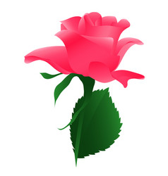 Blossoming flower pink rose vector