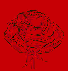 Blooming red flower rose ouline vector