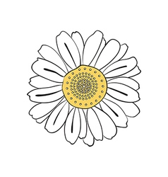 Hand drawn daisy vector