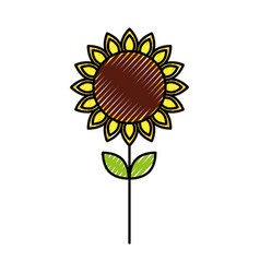 Sunflower natural plant petal decoration vector